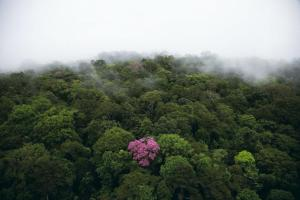 This photo by the renowned Yann Arthus-Bertrand illustrates how the desire to be pink in an all-green world is possible!