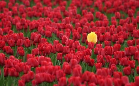 tall-poppy_-720x451.jpg