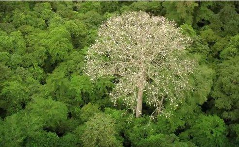 of-forest-men-yann-arthus-bertrand-3.jpg.492x0_q85_crop-smart
