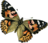 01_butterfly_painted_lady_graphicsfairy (1)