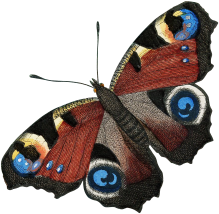 04_peacock_butterfly_graphicsfairy